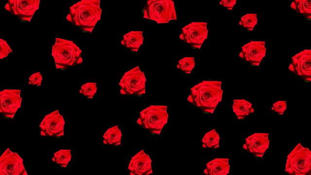 hd :赤いバラのアニメーション - 植物 バラ点の映像素材/bロール