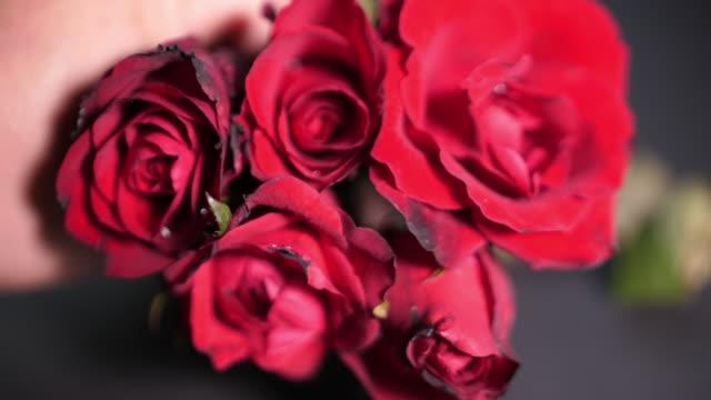 stockvideo's en b-roll-footage met rode rozen, valentijnsdag - cadeau