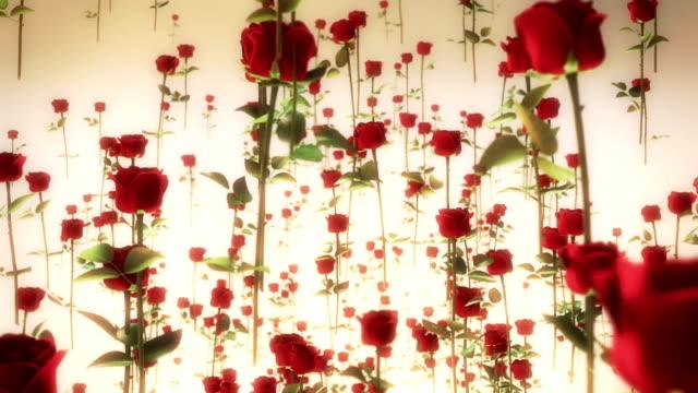 rote rosen  - rose stock-videos und b-roll-filmmaterial