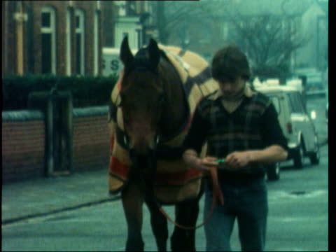 stockvideo's en b-roll-footage met merseyside southport ms red rum led out of stable rl ms ditto along street lr tilt legs ms red rum led towards ms red rum into stall ms postman with... - southport engeland