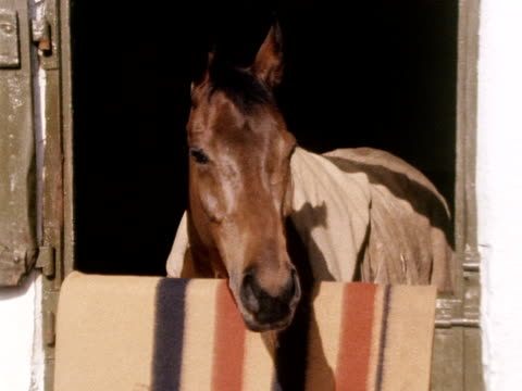 red rum looks out over his stable door. - 厩舎点の映像素材/bロール