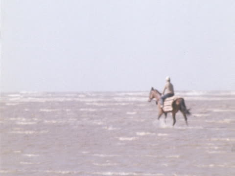 stockvideo's en b-roll-footage met red rum walks through the shallows on southport beach during a training session - southport engeland