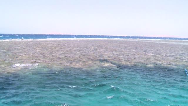 vídeos de stock, filmes e b-roll de red sea coral reef - red sea
