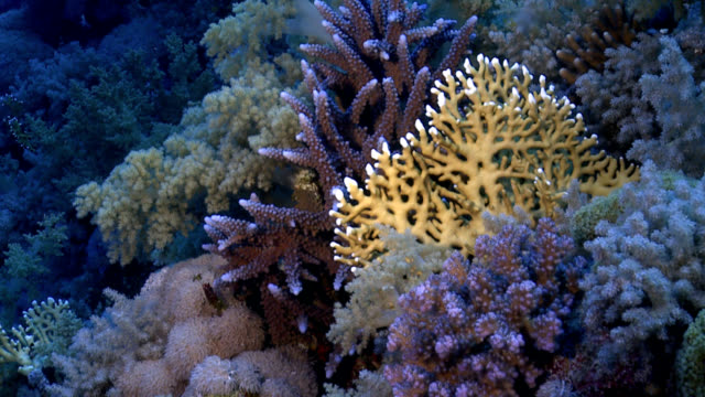 red sea coral reef - soft coral stock videos & royalty-free footage