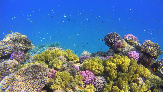 red sea coral reef with lot of fisch - red sea stock videos & royalty-free footage