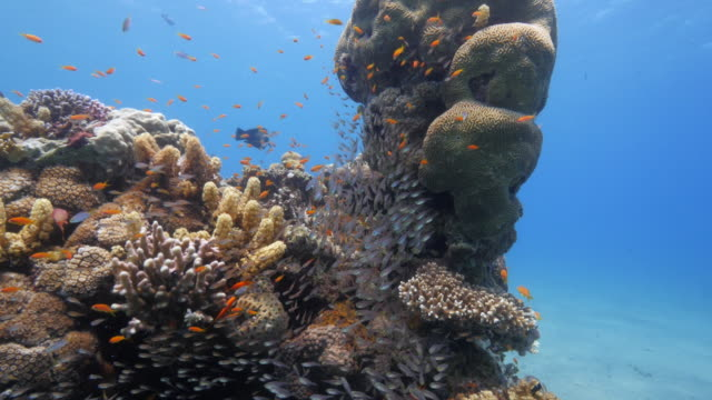 red sea - coral reefs - reef stock videos and b-roll footage