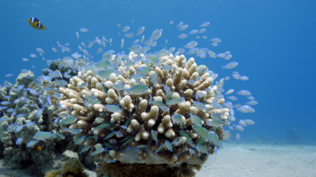 red sea - coral reefs - rotes meer stock-videos und b-roll-filmmaterial