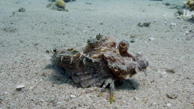 vídeos y material grabado en eventos de stock de red sea - coral reefs - rascacio