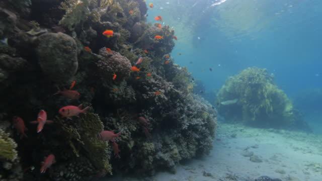 vídeos de stock e filmes b-roll de red sea - coral reefs - mar vermelho