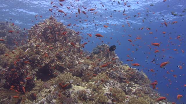 vídeos y material grabado en eventos de stock de mar rojo - cnidario