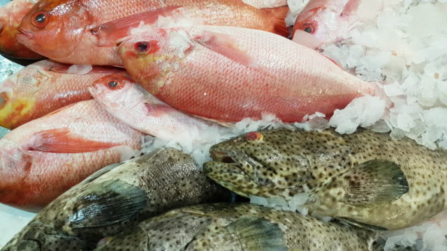 red snapper and black spotted grouper on fish market display - perch fish stock videos and b-roll footage