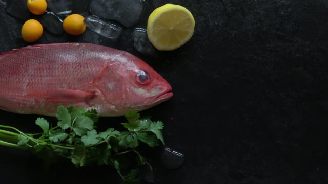 red snapper fresh and raw on ice with fresh garnish - garnish stock videos & royalty-free footage