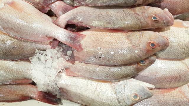 red snapper auf fisch markt display - auslage stock-videos und b-roll-filmmaterial