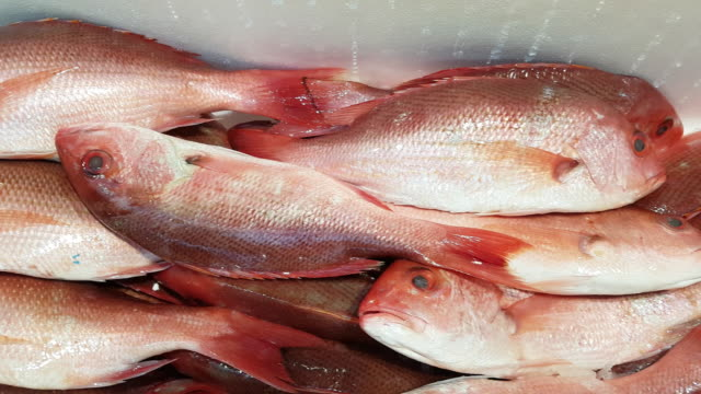 red snapper on fish market display - snapper fish stock videos & royalty-free footage