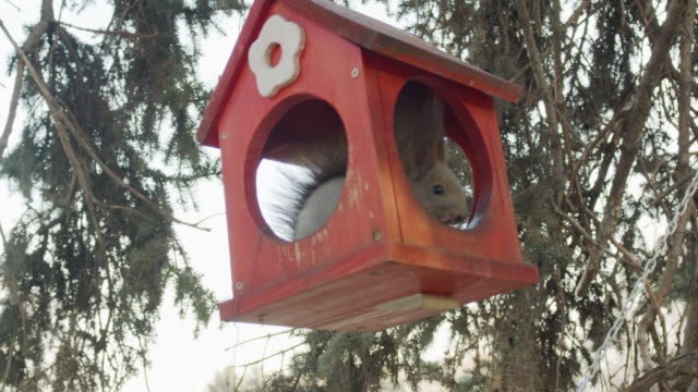 red squirrel - birdhouse stock videos & royalty-free footage