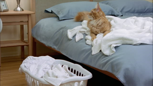 red tabby maine coon lying on laundry on top of bed - wäschekorb stock-videos und b-roll-filmmaterial
