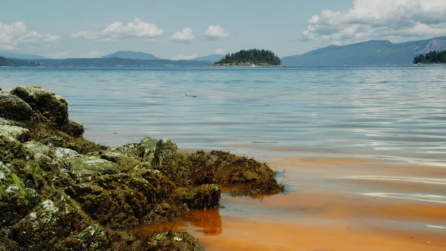 red tide / algal bloom - red tide stock videos & royalty-free footage