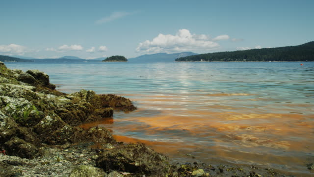 red tide / algal bloom - pacific ocean stock videos & royalty-free footage