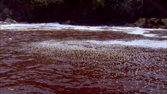 ms red tide blooming on ocean surface / guanacaste, costa rica - red tide stock videos & royalty-free footage