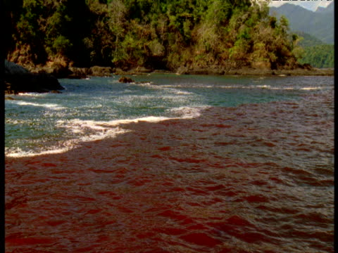 red tide meets green water, panama - red tide stock videos & royalty-free footage