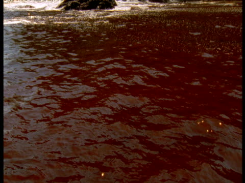 red tide off coast of panama - red tide stock videos & royalty-free footage
