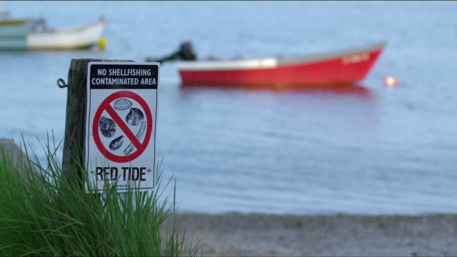red tide warning sign - no shellfishing contaminated area - with water and red boat out-of-focus in background - warning sign stock videos & royalty-free footage