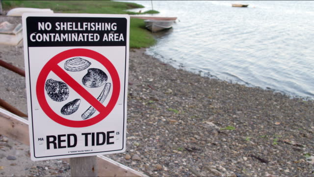 red tide warning sign - no shellfishing contaminated area - with water, rocky shore, and small boats in background - red tide stock videos & royalty-free footage