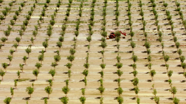 AERIAL A red tractor driving across a vast orchard in California