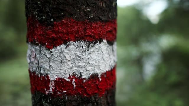 vídeos y material grabado en eventos de stock de marcador rojo de sendero en el árbol cerca del camino del bosque - madera material de construcción