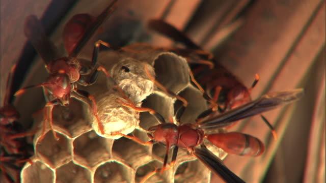 red wasps tend to their nest. - gliedmaßen körperteile stock-videos und b-roll-filmmaterial
