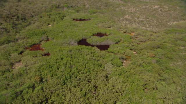 vídeos y material grabado en eventos de stock de red water fills sinkholes in a dense forest. - hispaniola