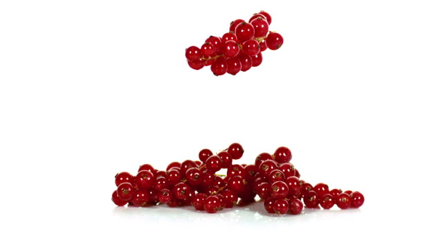 Redcurrants, ribes rubrum, Fruits falling against White Background, Slow Motion