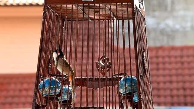 rosso-baffi - gabbia per gli uccelli video stock e b–roll