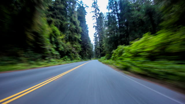 redwood forest driving time lapse - fog stock videos & royalty-free footage