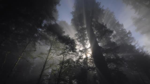 vídeos y material grabado en eventos de stock de redwood forest, sun rays  and fog, redwood national park, ca - bosque de secuoyas