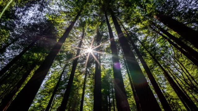 vídeos de stock, filmes e b-roll de floresta de redwood - parque nacional de redwood