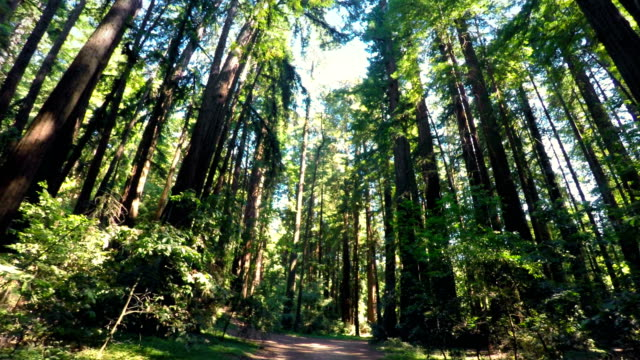 redwood forest  - nordkalifornien stock-videos und b-roll-filmmaterial