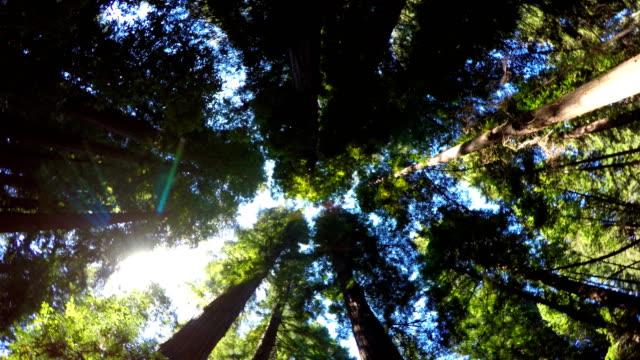 vídeos y material grabado en eventos de stock de bosque de secuoyas - parque nacional de secoya