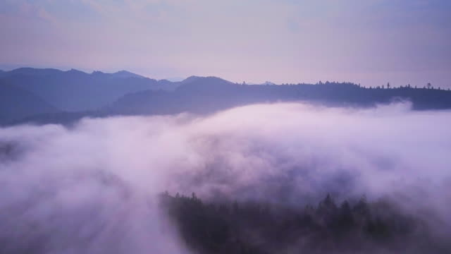 redwood trees poking out of fog - aerial shot - california del norte stock videos & royalty-free footage