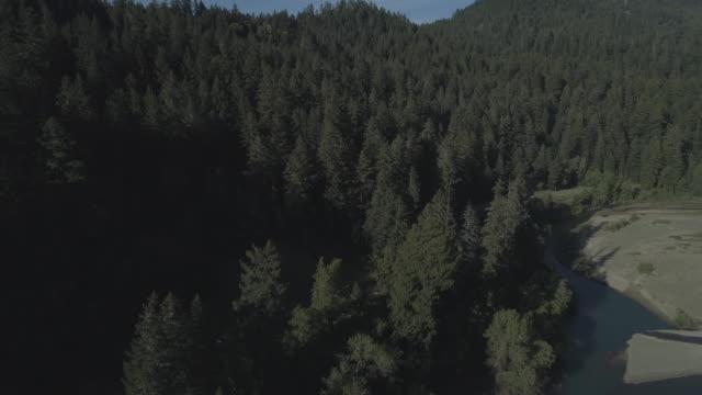 """vídeos de stock, filmes e b-roll de redwoods ao longo do rio eel nas proximidades de humboldt redwoods state park, e carl """"a"""" anderson redwoods natural preserve, califórnia, na noite de primavera. vídeo aéreo do zangão com o movimento ascendente da câmera. - parque estatal de humboldt redwoods"""