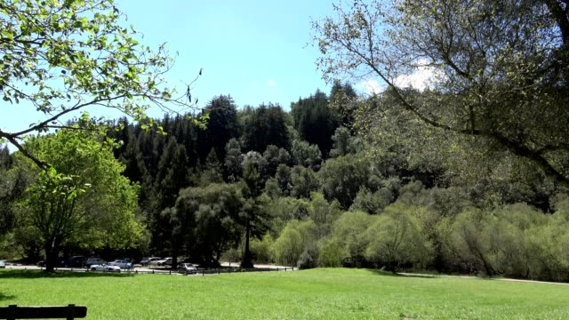 redwoods regional park - oakland verwaltungsbezirk alameda county stock-videos und b-roll-filmmaterial