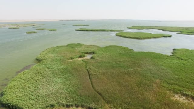 vidéos et rushes de antenne: backwaters reed des lacs - bras mort de cours d'eau