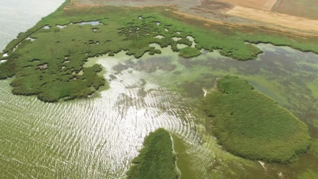 aerial: reed backwaters of lakes - backwater stock videos & royalty-free footage