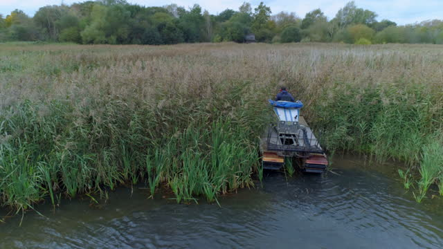 reed cutting at amwell nature reserve - bird watching stock videos & royalty-free footage