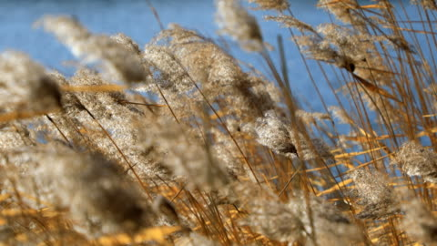 reed marsh,beijing,china - marsh stock videos & royalty-free footage