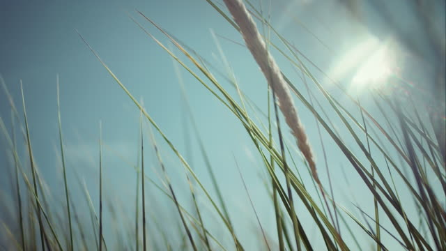 reed waving in the wind - reed grass family stock videos and b-roll footage