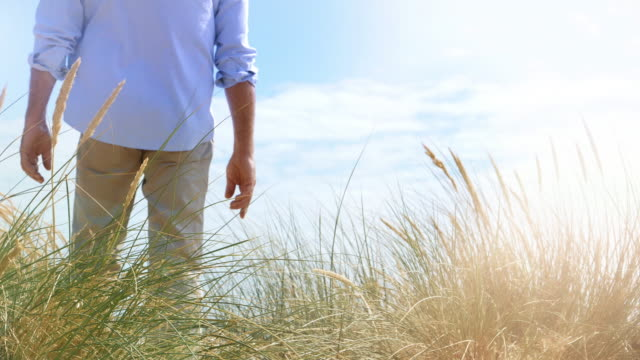 reeds and dunes, man walking back view. - seascape stock videos & royalty-free footage