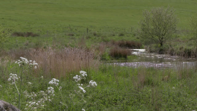 reeds and grass swaying in the wind next to a pond - johnfscott stock videos & royalty-free footage