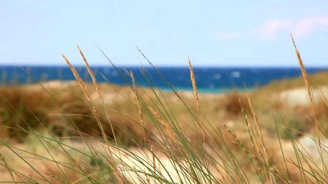 HD: Reeds and Ocean Background