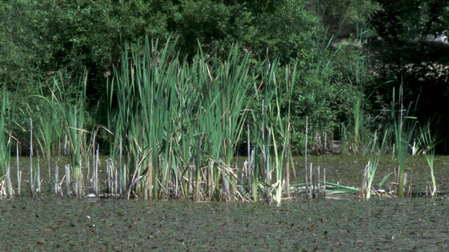 reeds and trees moving in the wind - johnfscott stock videos and b-roll footage